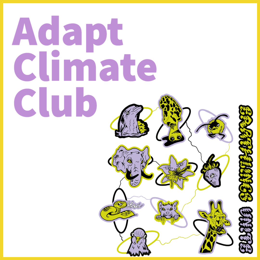 @adapt_____