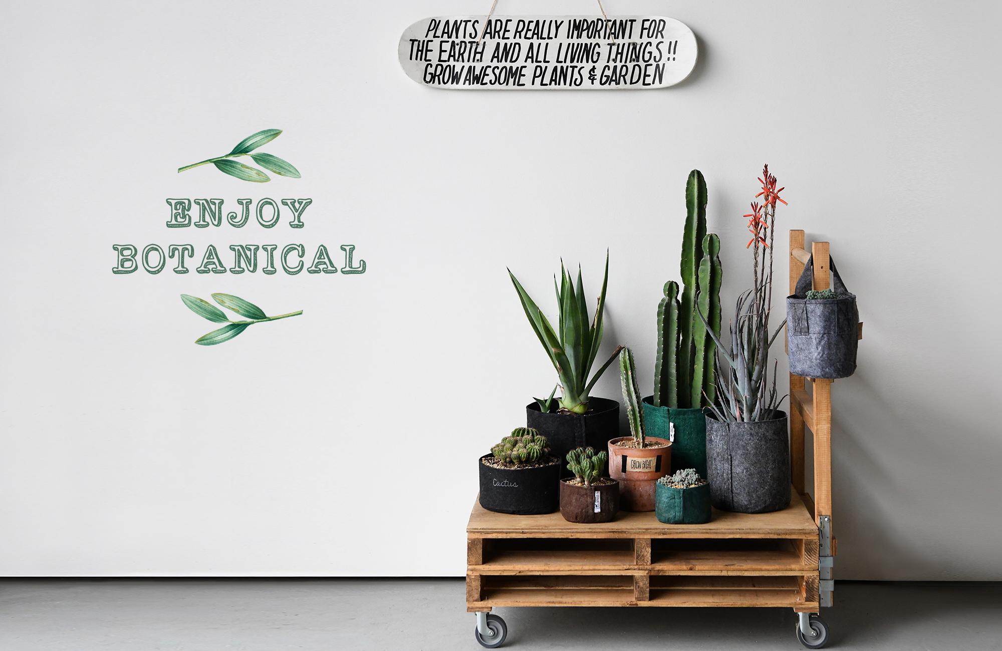 新しい感覚で植物を楽しむ